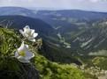 Krkonošský národní park slaví 55. narozeniny