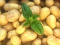 Použití brambor v kuchyni je rozmanité