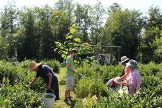 Projekt rozvoje čajových zahrad v Gurii (Gruzie)