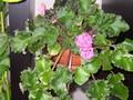Rostliny vytvářejí živou a barevnou dekoraci